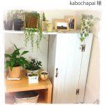自作の家具の扉に使わせて頂きました(kabochapai様)