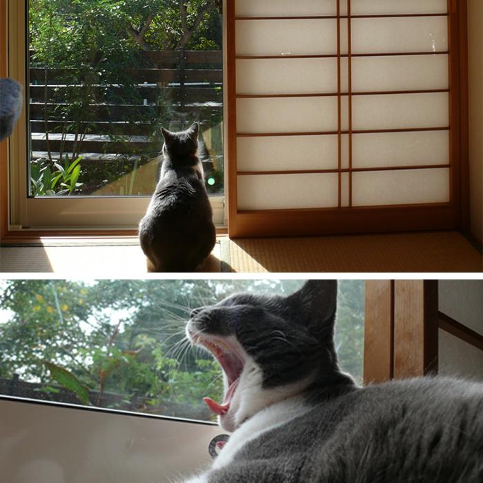 窓の外に興味津々のニャンコたち