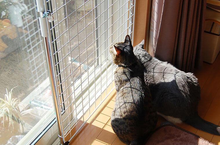 猫の脱走・転落を防ぎながら部屋の空気の入れ換えもできる