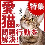 愛猫の問題行動を解決!